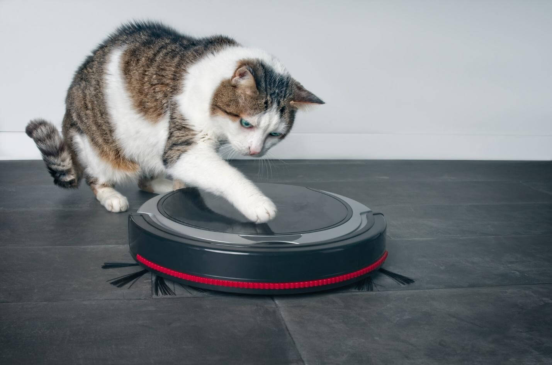 gato-robot.jpg